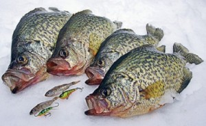 Crappie Lures and Bait