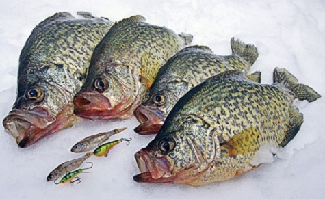 Crappie fishing tips how to catch crappie for Best crappie fishing times
