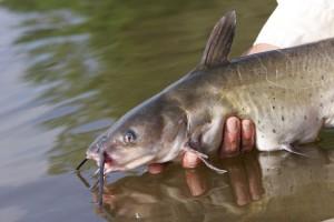 castfishing tips