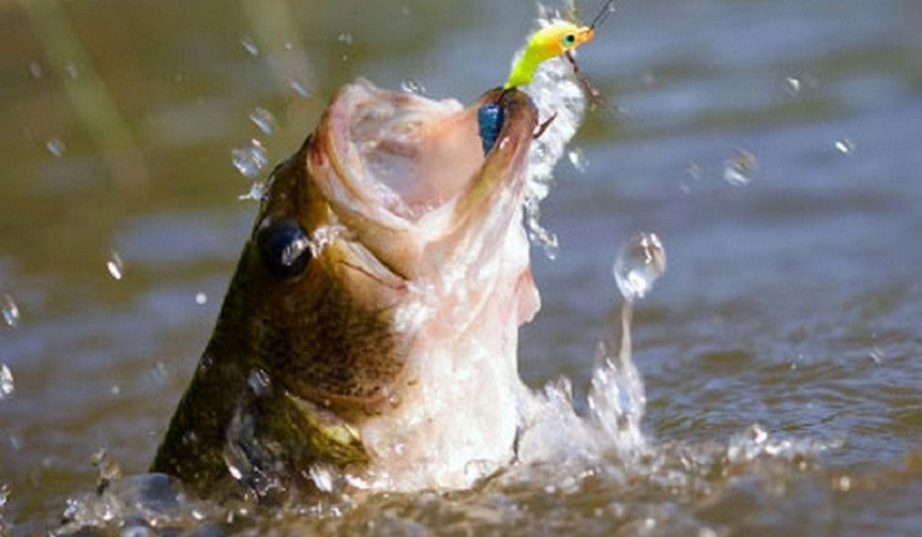 Bass fishing tips and techniques how to catch big bass for Bass fishing tips