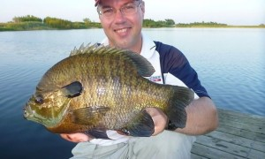 how to catch bluegill